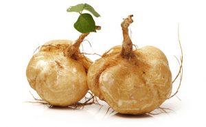 pueraria mirifica roots